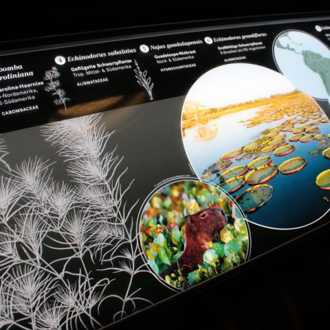 Light-Panel im Victoria-Haus, Botanischer Garten Berlin Dahlem